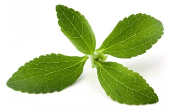 Stevia_Leaves1__09396_zoom