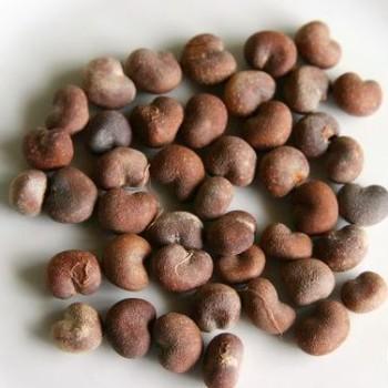 baobab oil seeds
