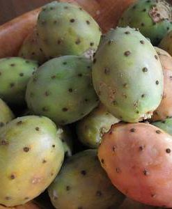 prickly-pear-oil-fruit