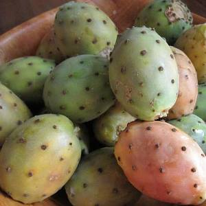 prickly pear oil fruit