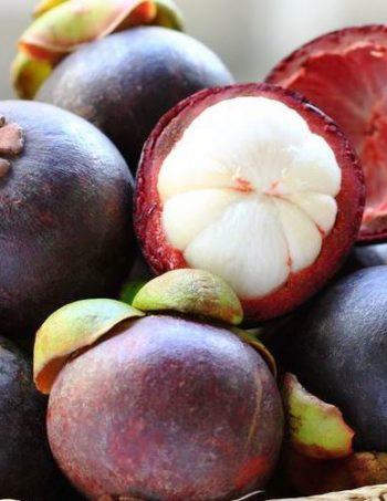 Kokum Butter Fruit 1