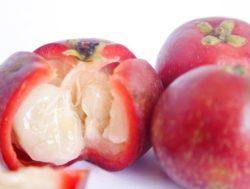 Kokum Butter Fruit 2